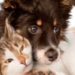 Câmara vota entrada de clínicas veterinárias no Simples Nacional no fim do mês