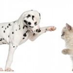 Cão e gato em perfeita harmonia