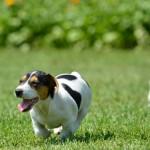 Casa com jardim e piscina exige cuidados com os pets