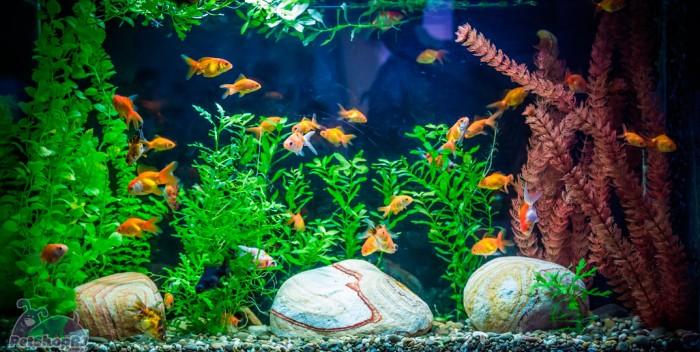 Cuidados com os peixes de estimação