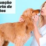 Geriatria para cães e gatos