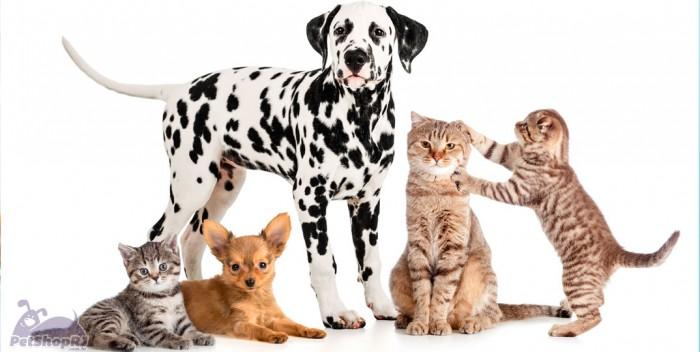 População animal estável