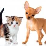Rio proíbe cirurgias estéticas em cães e gatos