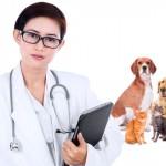 Seminário internacional online debate bem-estar animal