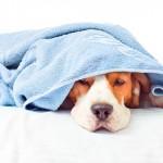 Ação para regulamentar genéricos veterinários