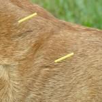 Acumpuntura: solução para todos os casos