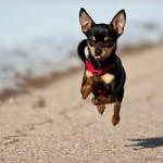 Cachorros de pequeno porte