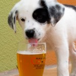 Cerveja sob medida para cachorro