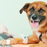 Doenças comuns em cachorros