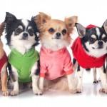 Hora de escolher roupas para cachorro