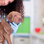 Medicina Veterinária revisa código de ética profissional