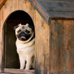 Por que ter uma casinha de cachorro?