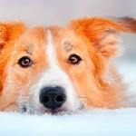 SuperSimples, aprovado na Câmara, pode beneficiar 70 mil veterinários