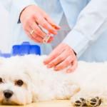 Vacinação em massa como solução para Raiva animal