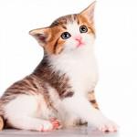 Veja o passo a passo para adotar um gato