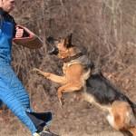 As 12 melhores raças para cães de guarda
