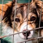 Adoção de animais terá desconto no IPTU