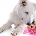 Cuidados com a dieta do seu cachorro