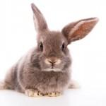 Dicas para aumentar a vida dos coelhos de estimação