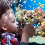 Dicas para cuidar de peixes de aquário