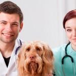 Medicina veterinária em busca de mais qualidade