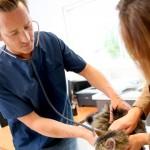 Novas regras de registro para médicos veterinários