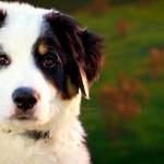 Programa de TV revela, hoje, superpoderes dos cães