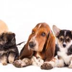 Cães de rua: uma vida errante pelas cidades