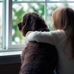 Dicas para cuidar de cães e gatos no inverno