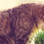 Histórias e teorias para as sete vidas dos gatos