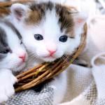 Ingleses desconhecem vida sexual dos gatos