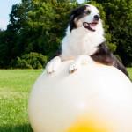 Regras básicas para a saúde do seu pet