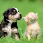 As vantagens da castração de cães e gatos