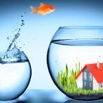 Benefícios da criação de peixes de aquário