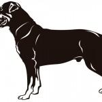 Cães de grande porte: animais de muita utilidade