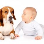 Crianças e pets em perfeito equilíbrio