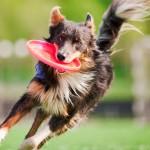 Esportes para cães: uma diversão muito boa para a saúde