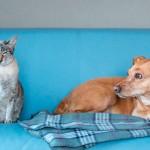 Eutanásia em cães e gatos ganha guia