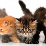 Hora de cuidar do pelo dos gatos