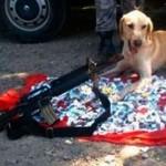 Labrador, herói da polícia, desapareceu em favela