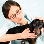 Medicina Veterinária: código de ética em consulta