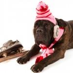 Saiba como proteger seus animais no inverno