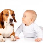 Bebês e cães têm habilidades semelhantes aos 5 meses de idade