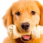 Cuidados com os ossos para cães