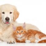 Indústria pet aumenta volume de exportação