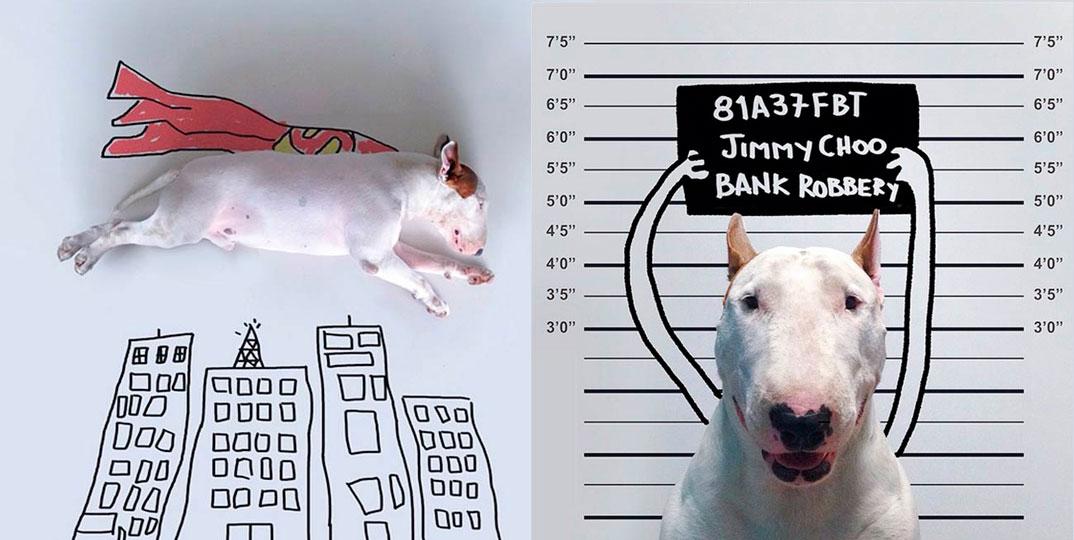 O-outro-lado-do-Bull-Terrier-2