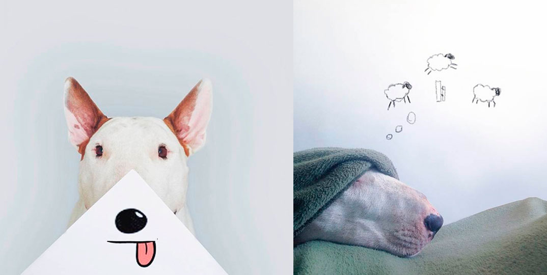 O-outro-lado-do-Bull-Terrier-3