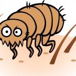 Prevenção: remédio contra carrapatos e pulgas