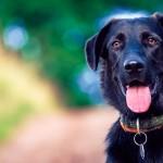 Regras mais precisas para pesquisa com animais