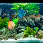 Transporte de peixes ornamentais tem nova regra